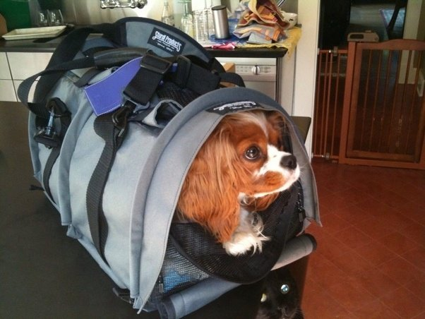 What Is The Best Soft Dog Carrier For Travel Quora