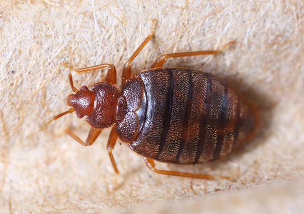 Stupendous Whats The Best Way To Check For Bed Bugs Quora Short Links Chair Design For Home Short Linksinfo