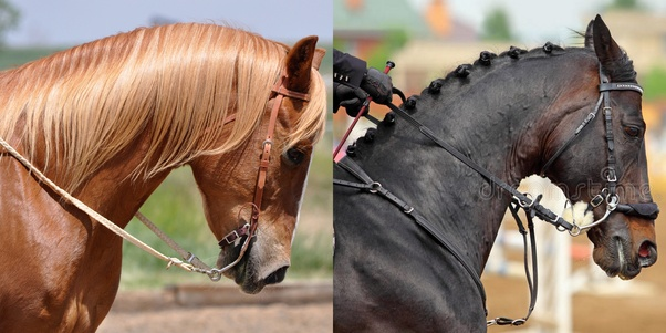 Is horse riding animal abuse? - Quora