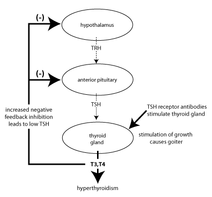 How is hyperthyroidism measured through the thyroid stimulating how is hyperthyroidism measured through the thyroid stimulating hormone quora publicscrutiny Images