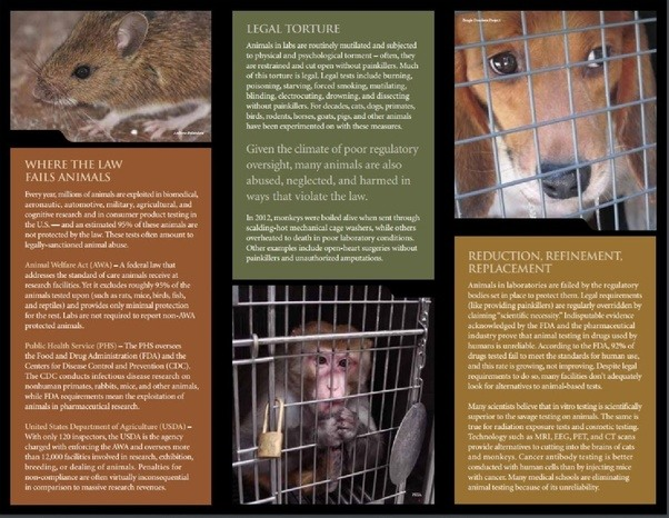 animal cruelty outline Animal cruelty essay: living in harmony in: animal cruelty essay conclusion i am pretty sure that all these awful crimes towards the animals are committed and.