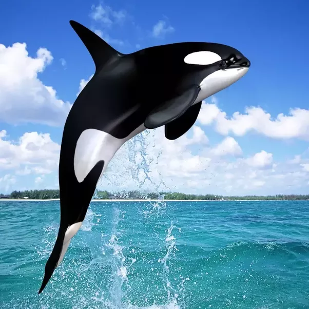 """detecting whale meat using dna """"i'm delighted that earthtrust is using dna identification to provide irrefutable evidence of the illegal sale of whale meat maybe we can't recreate the dinosaurs – but at least we can use dna to save these magnificent mammals who still share our planet""""."""