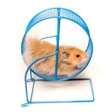 for Hamster Wheel