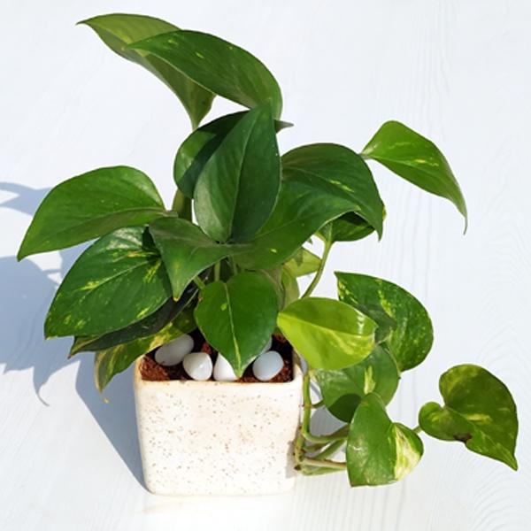 What are the 3 best indoor plants for my bedroom (Delhi