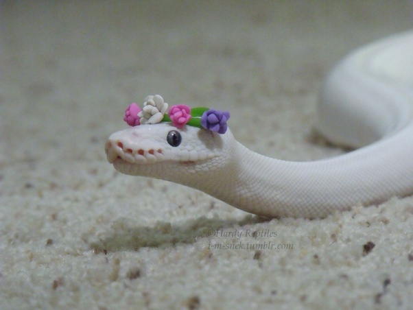 why are snakes so cute quora