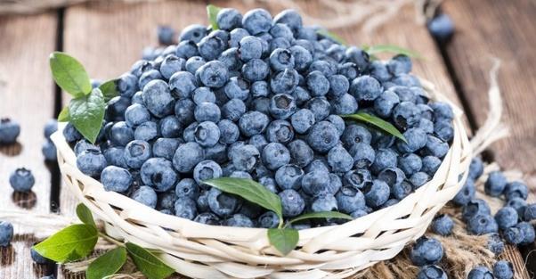 Sensational Why Do Blueberries Cause Diarrhea Quora Ibusinesslaw Wood Chair Design Ideas Ibusinesslaworg
