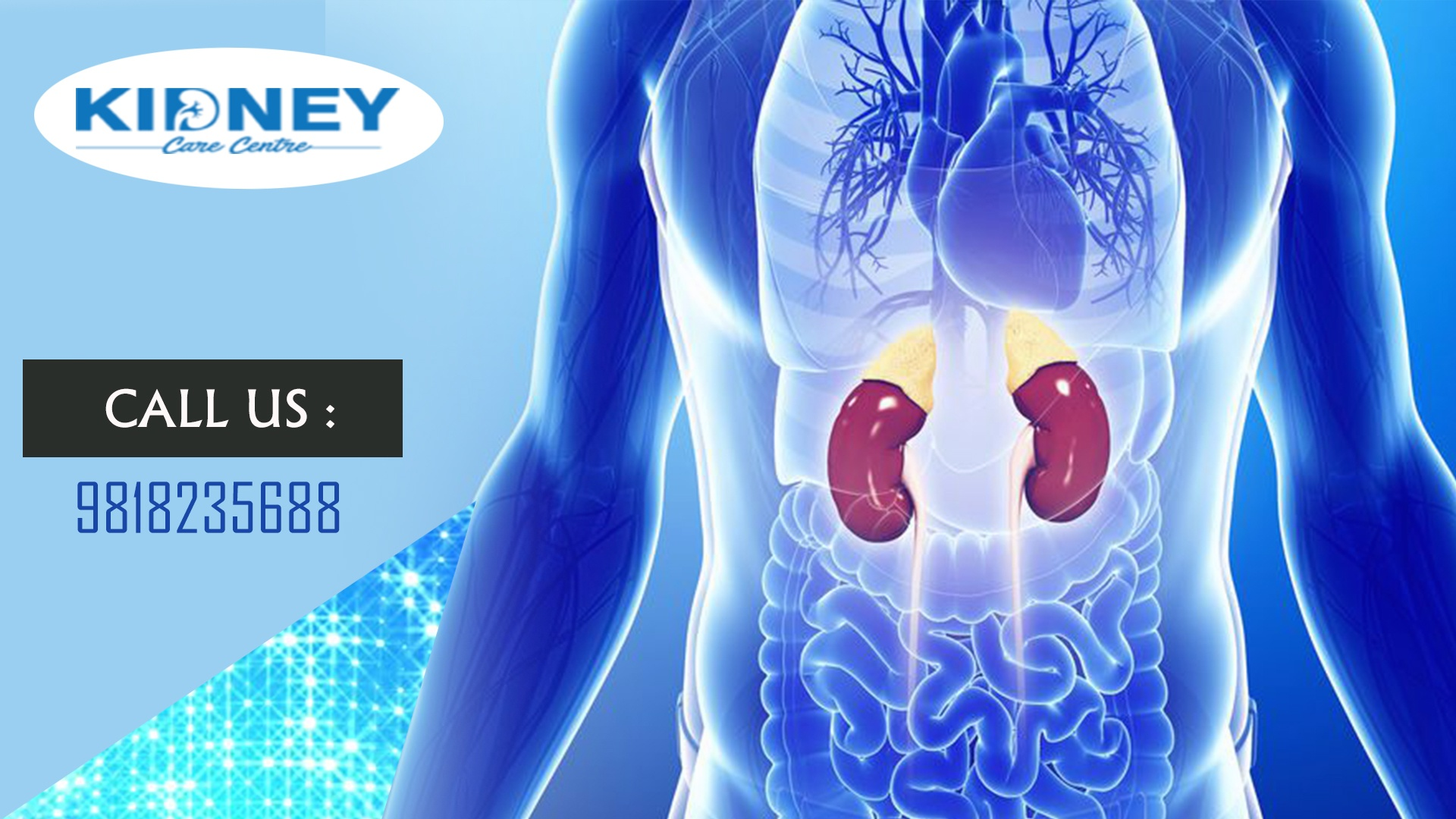What Are The Names Of The Covers Of The Kidney Quora