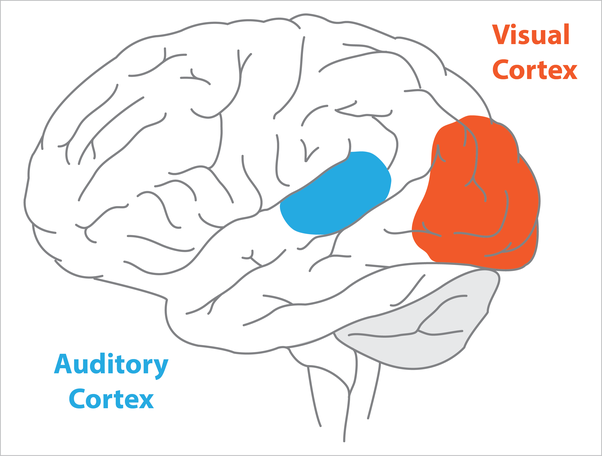 What part of the brain controls hearing? How is it done ...