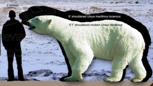 how many penguins would it take to kill a polar bear quora