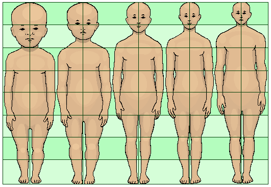 How is head size compared to body size? - Quora