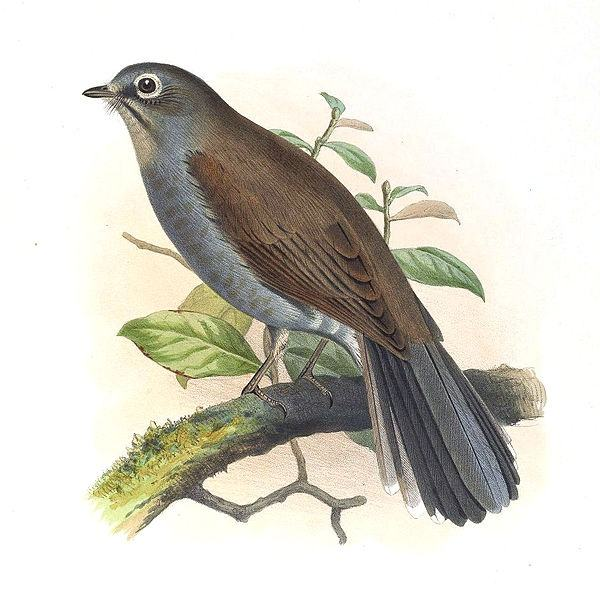 letter bird names what are some bird names that are 4 letters quora 10