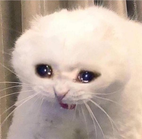 Unduh 93+  Gambar Kucing Sedih Menangis Paling Baru Gratis
