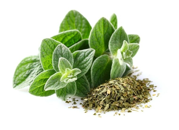 Is it actually possible to pass off oregano as marijuana? - Quora