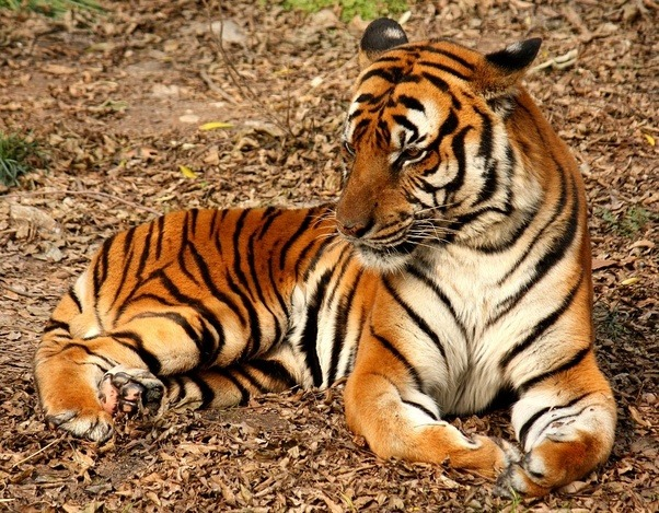 why are wild animals in danger of extinction name some of those