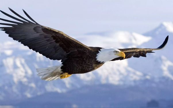 Do you want to soar like an eagle? Why? - Quora