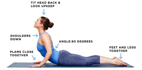 muscle diagram project what is bhujangasana  its variation and benefits  quora  what is bhujangasana  its variation and benefits  quora
