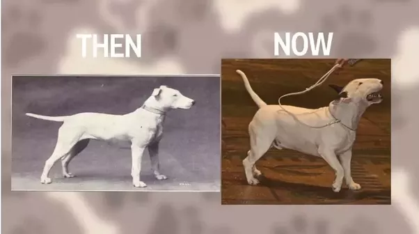 When Were The Different Dog Breeds Made