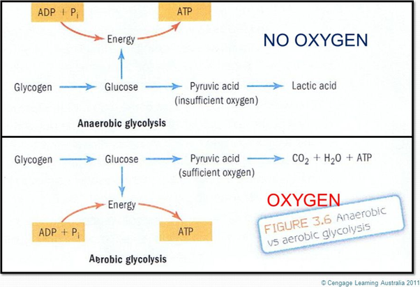 What is aerobic glycolysis? - Quora