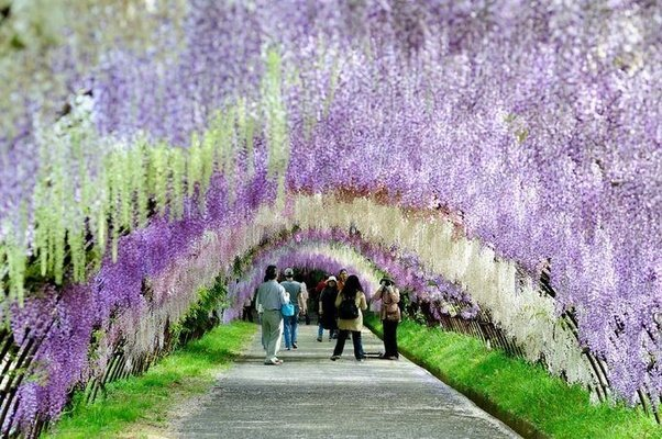 What is a common and perennial climbing flower that people plant in boy they sure make a mess though if your friends arent really into gardening this isnt the plant for them wisteria is a very vigorous vine that will mightylinksfo