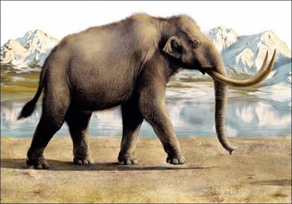 What are the most interesting and amazing extinct animals? - Quora