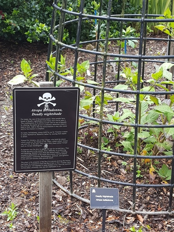 What Garden Is Well Known As The Poison Garden Quora