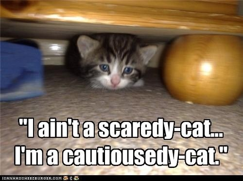 why do cats scare easily quora