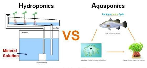 What Is The Difference Between Hydroponics And Aquaponics Quora