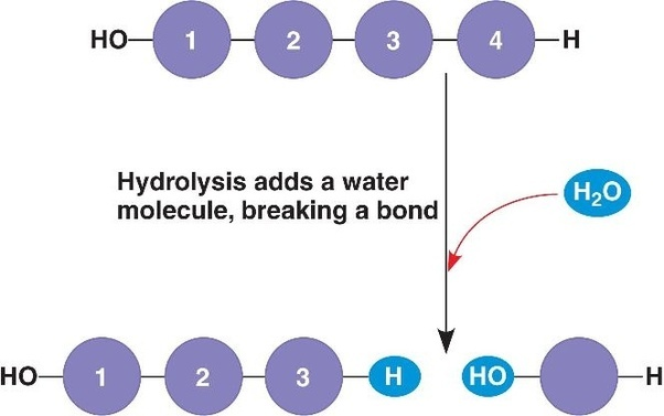 What Is The Difference Between Hydrolysis And Hydration