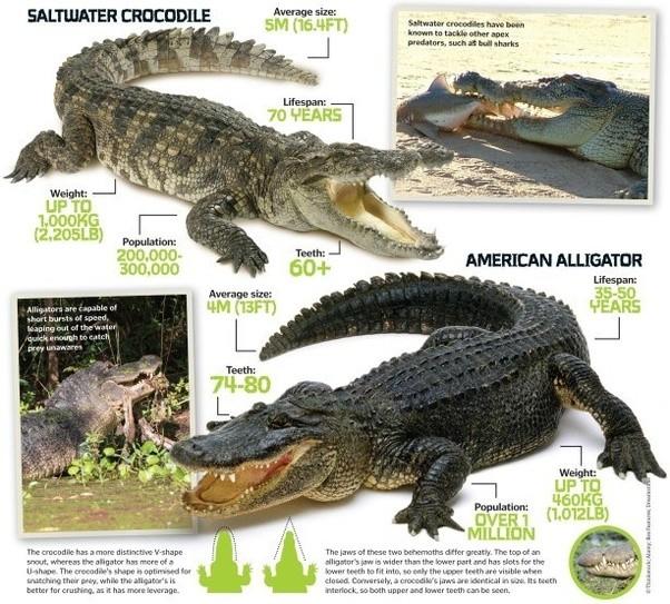 Alligator Scientific Diagram - Auto Wiring Diagram Today •