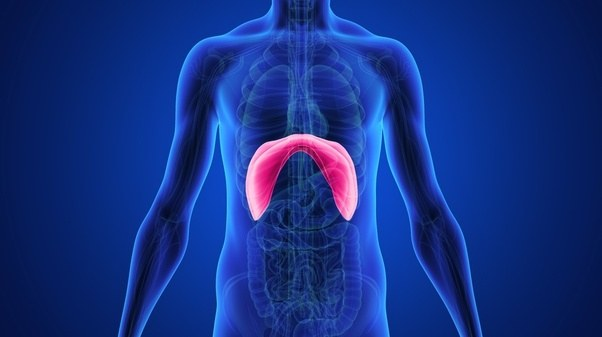 The lungs are in the chest, so how does belly breathing (diaphragm ...