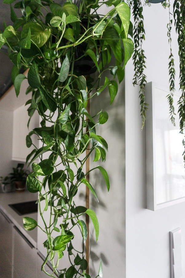 What variety of house plant do you like best? - Quora