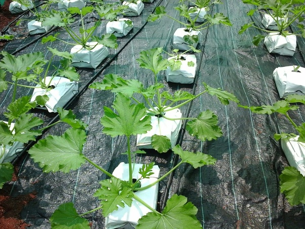 How much does a hydroponic plant cost per acre? - Quora