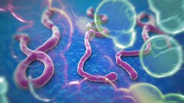 is the ebola virus pandemonium or a real pandemic threat quora
