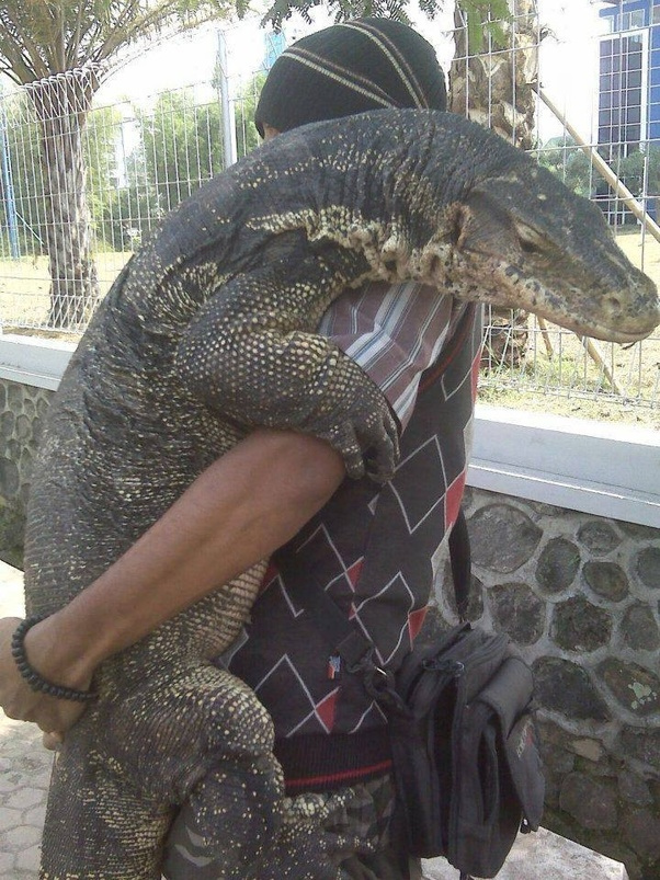 How to buy a Komodo Dragon and have it shipped to my house - Quora
