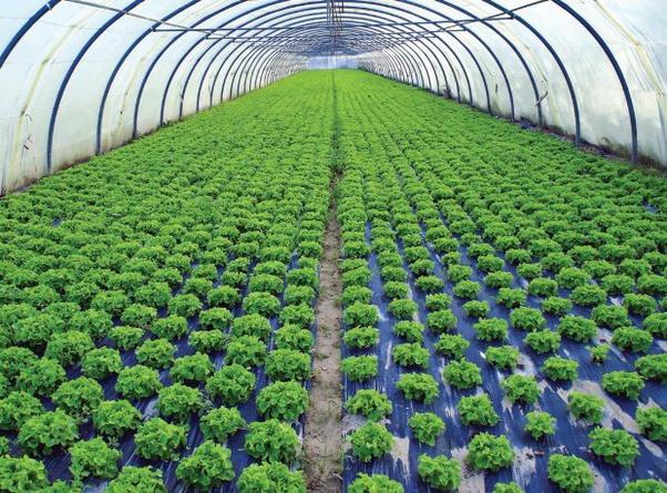 bisnis agro