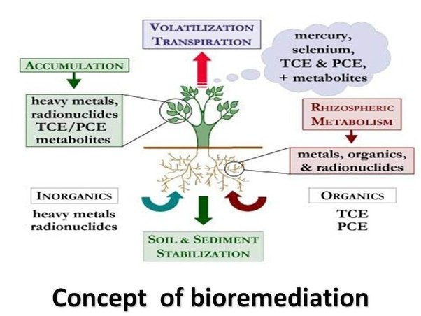 What is bioremediation quora for What does tce mean