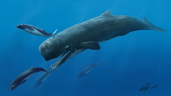 whale predator Sperm