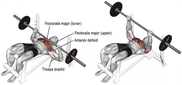 Can I Build A Big Chest Just By Doing Overhead Press Quora