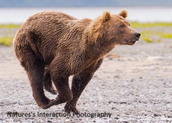 Rencontre Femmes à Bear