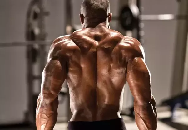 how to build back muscle at home