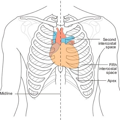 why is cardiac pain usually in the center of the chest and not the left side? - quora heart pain diagram