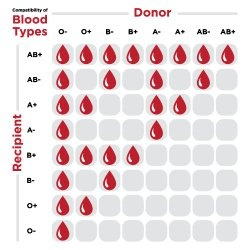 What are the advantages of having an AB positive blood type