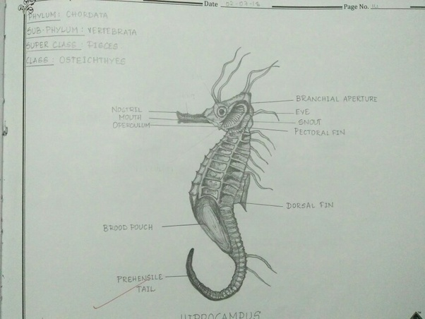 How To Improve My Drawing Skills Especially Scientific Ie