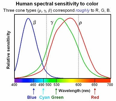 If We Receive A Signal That Causes The Red Receptor To Report High Reading But Not Any Other Color Know This As For Example Wavelength