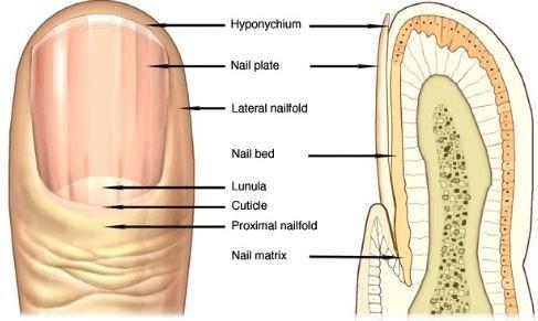 Fingernail Ridges Treatment