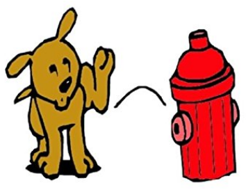 Why Do Dogs Like To Pee On Fire Hydrants Quora