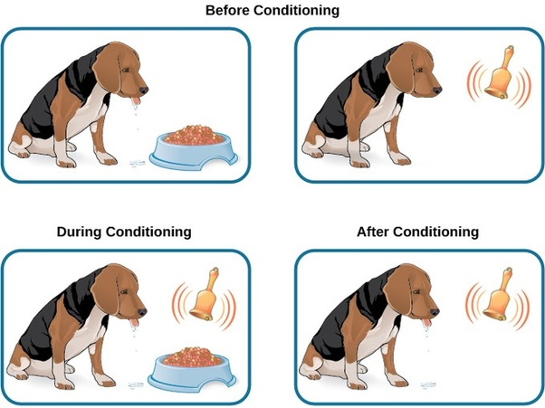 What are examples of classical conditioning in the classroom? - Quora