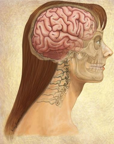 Is the brain a muscle or are there muscles inside your ...