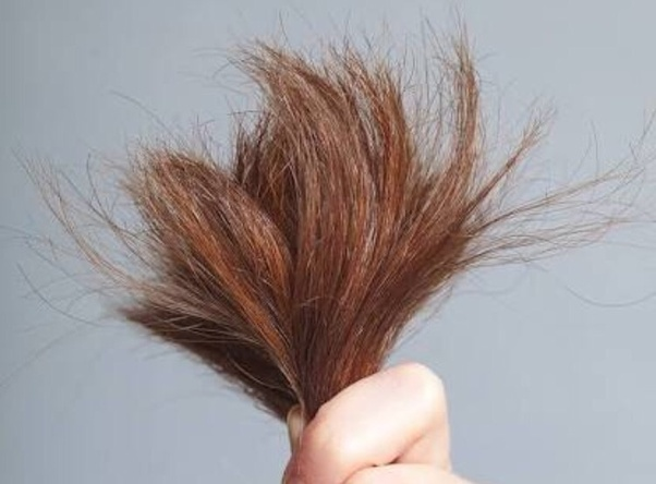 How To Get Rid Of Frizzy Rough Dry Hair With Split Ends Quora