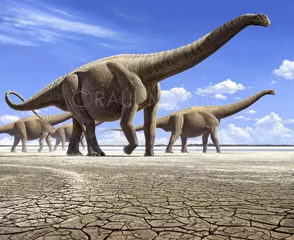 Applying Science To Understanding Large Dinosaurs Picture Of Brachiosaurus